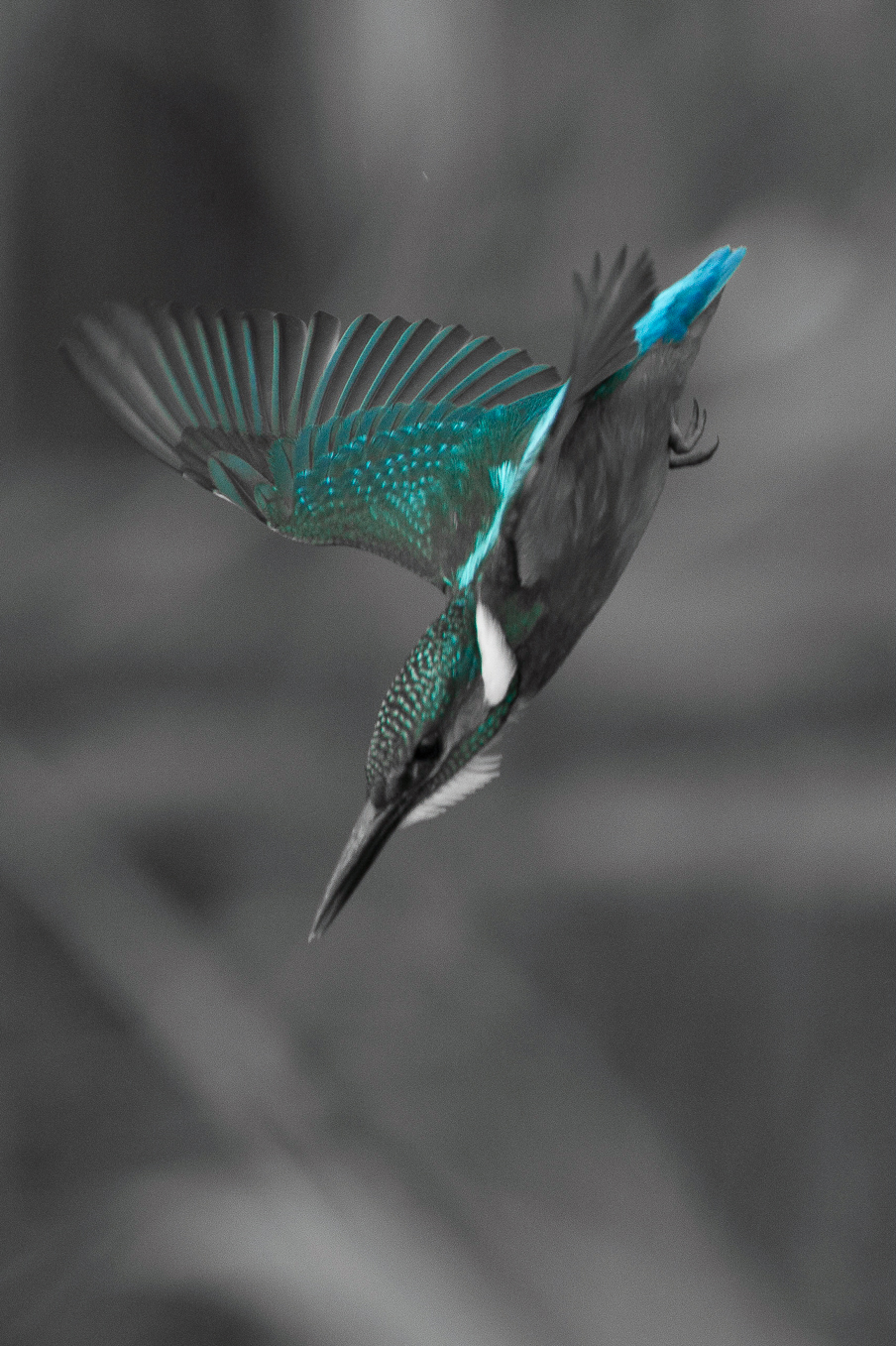 Kingfisher Colour