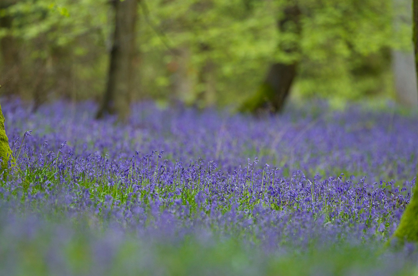 Photo guide to woodland flowers